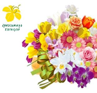 Flora Festival 2013 <br />1 December 2013 – 28 February 2014