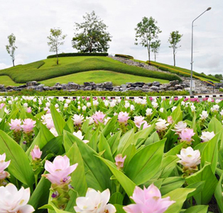 Curcuma: Siam Tulip Festival, coming August, to be arranged in the Royal Park Rajapruek