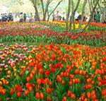 โครงการพัฒนาประสิทธิภาพการเรียนรู้เทคโนโลยีการปลูกไม้ดอก