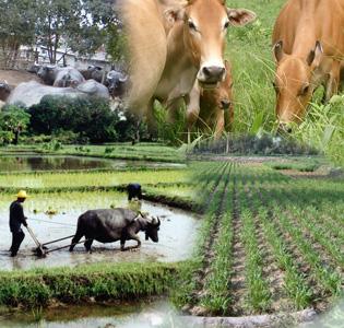 โครงการหลวงกับงานพัฒนาด้านปศุสัตว์บนพื้นที่สูง
