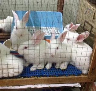 มาเลี้ยงกระต่ายกันดีไหม