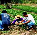 โครงการพัฒนาประสิทธิภาพการเรียนรู้เทคโนโลยีการปลูกผักอินทรีย์