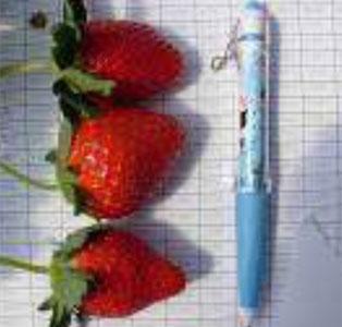 งานวิจัยเพิ่มผลผลิตและคุณภาพผลผลิต ต้นแบบการผลิตพืชเมืองหนาว