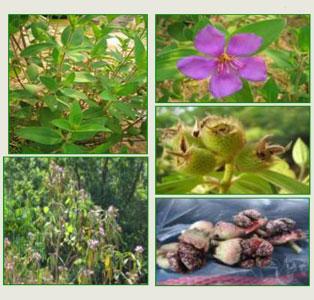 งานวิจัยความหลากหลายทางชีวภาพ การฟื้นฟูความอุดมสมบูรณ์ของสภาพป่าของชุมชนบนพื้นที่สูงสำหรับใช้ประโยชน์ด้านแหล่งอาหาร จ.เชียงใหม่