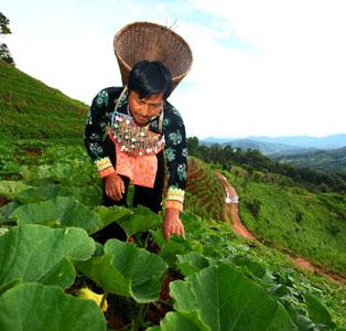 งานวิจัยสังคมและนโยบาย การแก้ไขปัญหาความยากจนของชาวเขา