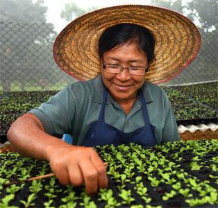 โครงการวิจัยและพัฒนาชีวภัณฑ์เกษตรและผลิตภัณฑ์สำหรับการปลูกพืชเพื่อลดการใช้สารเคมีบนพื้นที่สูง